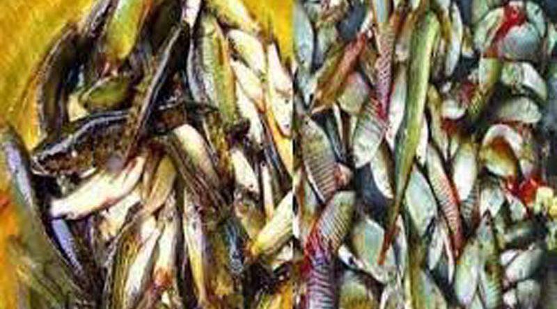 দ. সুনামগঞ্জে দেশীয় প্রজাতির মাছ বিলুপ্ত