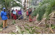 ঝিনাইদহের হাজরাতলা গ্রামে জমি দখল করতে গাছ কর্তন