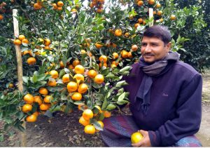 Jhenaidah Orange Pic (1)
