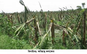 Jhenidah Agri crops loss Photo 29-05-20 (3)