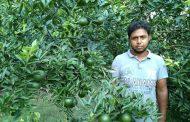 কালীগঞ্জে বিশ্ববিদ্যালয় পড়ুয়া শিার্থী ফজলে রাব্বীর ঐতিহ্যবাহি মাল্টা বাগান